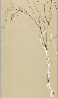 Sidewall, White Birches