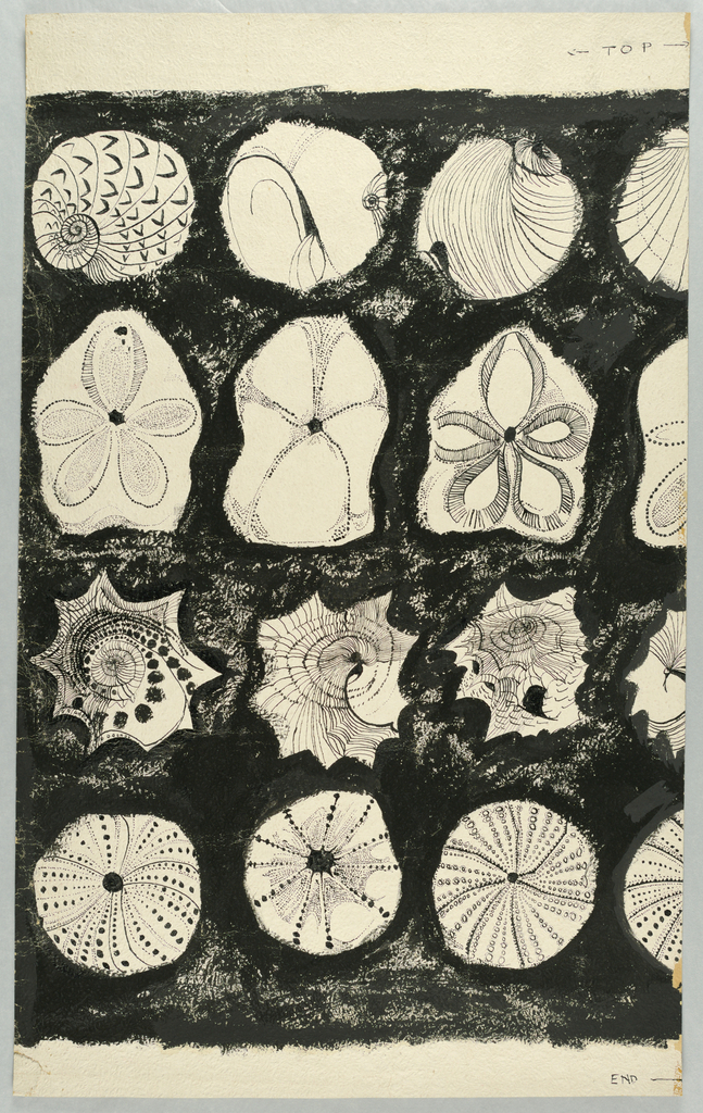 Four rows of six shells each, including sand dollars and sea urchins on black background.