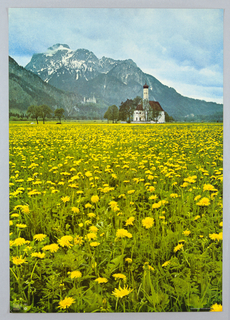 Color photographic reproduction of a field of yellow flowers in the foreground that fills three-quarters of the sheet. In the distance a white church with a brown-red roof surrounded by trees. Mountains in the distance. Texture of image is grainy.