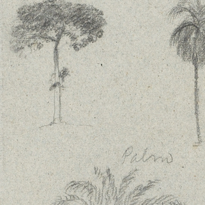 Horizontal rectangle:  Isolated and a group of trees and plants, across the top row; three palms with facade and steeple of a church, at center; and a tree and plant at a slope, at bottom.