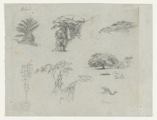 Horizontal view containing a palm at top left; a group of trees at top center; a group of trees on a distant hill at top right; hanging twigs at bottom left; a group of trees at bottom center; and a big tree beside a house with palms behind at top of right; and a crane flying toward right at bottom right.