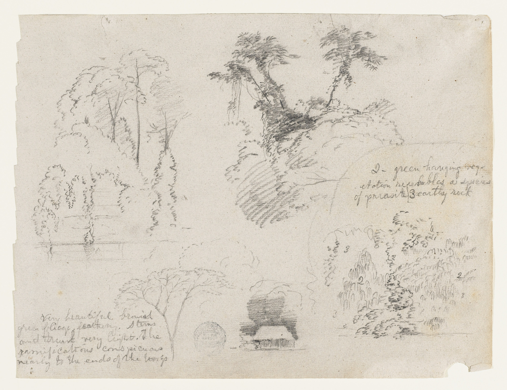 Horizontal view of containing trees on the bank of a river at top left; tree tops at bottom left; a house beneath trees at bottom center; and bushes with inscribed figures at bottom right.