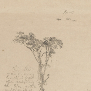 Horizontal sheet  with tree flying parrots at the top, followed by two rows with each  containing three botanical sketches.