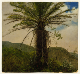 A central solitary palm tree stands with fronds fanned out against azure sky obscured by dense rosy clouds. From the foreground to the horizon, inclined verdant hills roll on.