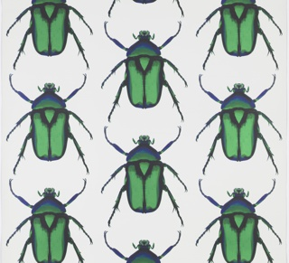 Sidewall, Beetle