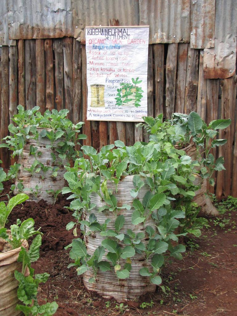 Garden-in-a-Sack, 2008–2013