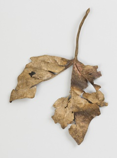 Brooch in form of naturalistic decaying leaf.