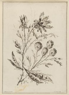 Print, Flower Bough, 1728-1808