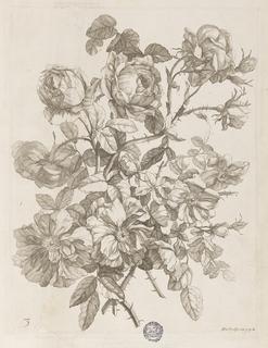 """Plate from """"Le Livre de toutes sortes de fleurs d'après nature,"""" book of bound engravings."""