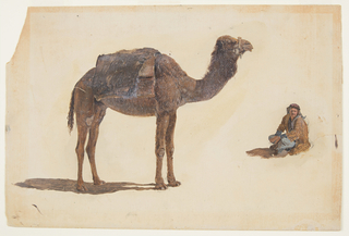 Horizontal drawing of a dromedary shown isolated without background.  It is at left, in profile, standing, toward the right.  The bedouin is in a crouching position.