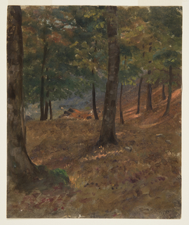 Sunlight penetrates a grove of trees. At right, a hill slopes upward.