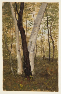 Drawing, In the Woods, Hudson, New York