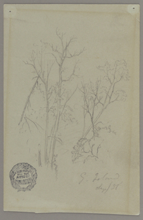 Drawing, Trees on goat island