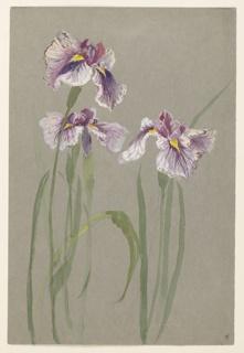 Design featuring three long sprays of violet irises.