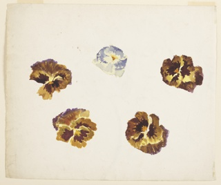 Horizontal sheet depicting five pansies in brown, violet and yellow, and blue and yellow.  On verso, a pink tulip near center of the sheet and a portion of another at the left side of the page.