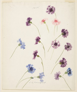 Vertical sheet depicting blue, violet, and pink cornflowers.