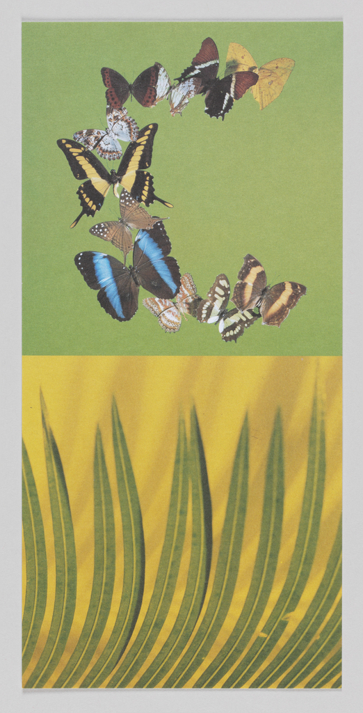 """In upper center, image of butterflies form """"C"""" shape. In lower center, green leaves against yellow background. On verso, """"Cocomalayo"""" rotated counter-clockwise and printed in green ink at center. DIFFA Chicago information in upper left with post stamp at upper right."""