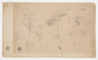 Horizontal sheet containing  a group of botanical sketches: at top left is a tree; a top center is a group of plants on a hillside; at top right is a bough; at center right are four designs of a parasitic plant growing on a branch, three straight stems of plants, a top of a bush, and the top of a plant; across bottom row from are five plants, with a large margin at left side of the sheet.