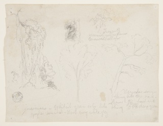 Drawing, Studies of Trees and Plants from the Río Magdalena, Colombia