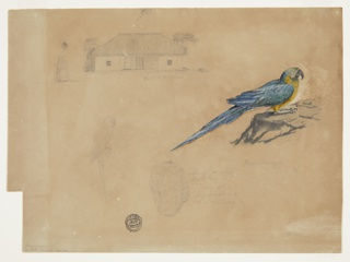 Sheet of studies including a standing woman facing left at top left, an elevation of a bungalow with a porch at top center, at left center a small study of a parrot and at right, a large colorful study of a parrot perched on a rock. The sheet has numerous notations in graphite.