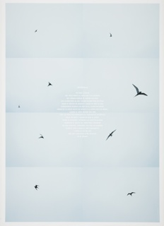 Second poster of the Circumpolar series depicting eight film stills of a bird in flight with text about the bird's circumlocution of the globe printed in white in the center.