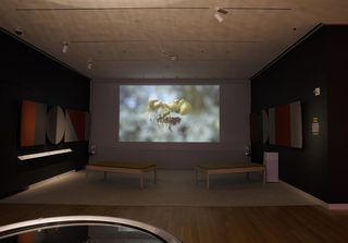 The Sensory Theater occupies a square carpeted footprint in an area towards the back of the exhibition. A video animation is projected onto a large screen. Colorblocked acoustic panels in orange and gray felt hang on the walls. Two wooden benches with woolen cushions are angled towards the screen.