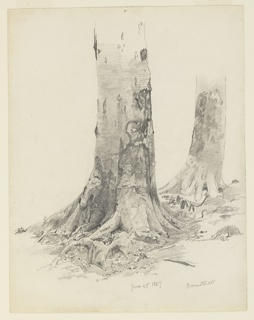 Drawing, Tree Trunks, Darmstadt