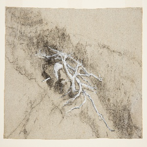 Drawing, Tree Roots on a Hillside, Prout's Neck, Maine