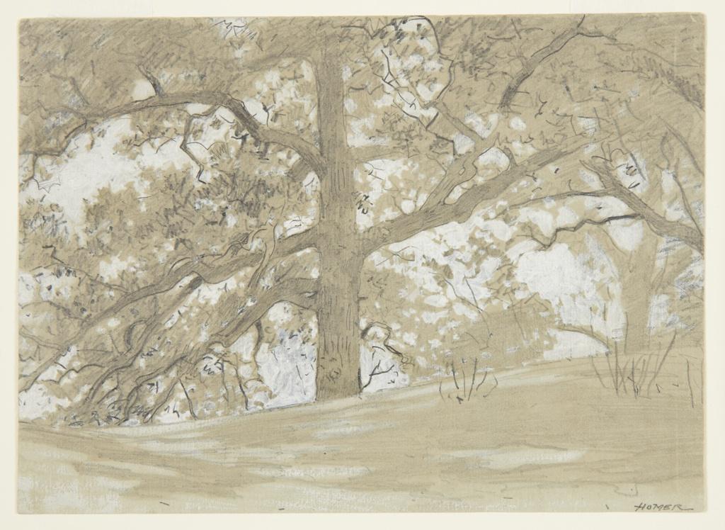 Drawing, Waverly Oaks