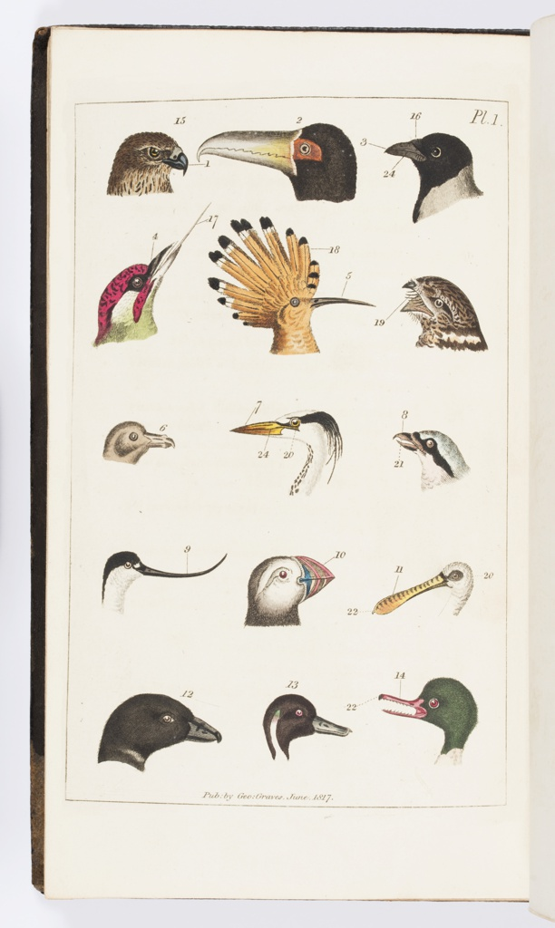 Book, The Naturalist's Pocket-Book, or, Tourist's Companion: Being a Brief Introduction to the Different Branches of Natural History, With Approved Methods for Collecting and Preserving the Various Productions of Nature, 1818