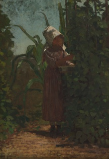Vertical view of a girl in a violet dress and white sunbonnet picking beans from one of a group of closely set bean plants.  Behind her, a cornstalk; more bean plants to left.