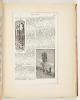 Ephemera, Fish-Pound, Old Landmarks, Illustrations for Scribner's Monthly (XVIII, No. 5, September 1879, p. 647)