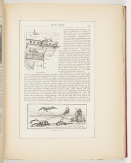 Ephemera, The Dove-Cote, A Sea-Side Turn-Out, Illustrations for Scribner's Monthly (XVIII, No. 5, September 1879, p. 649)
