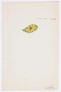 1 drawing on paper: Yellow-petaled daisy flower (black- eyed Susan ) on a leaf..