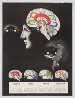 Color print of a magazine page explaining the functions of the brain. Features blurbs of text and brain illustrations focused on consciousness, sensation, perception, and voluntary action at the bottom of the page. A photographic image of a man with his left arm raised in front of a black car appears on the center right of the composition. An illustration of the man's head in profile that shows the inner workings his brain occupies the upper portion. The colors associated with particular brain functions in the images below (red, purple, green, and orange) are repeated and combined in the larger brain above. Green arrows indicated the movement between the different colors or functions inside the brain. The black car reappears to the left of the large head's eyes, with a red arrow and thin line connecting the car, eyes, and brain.