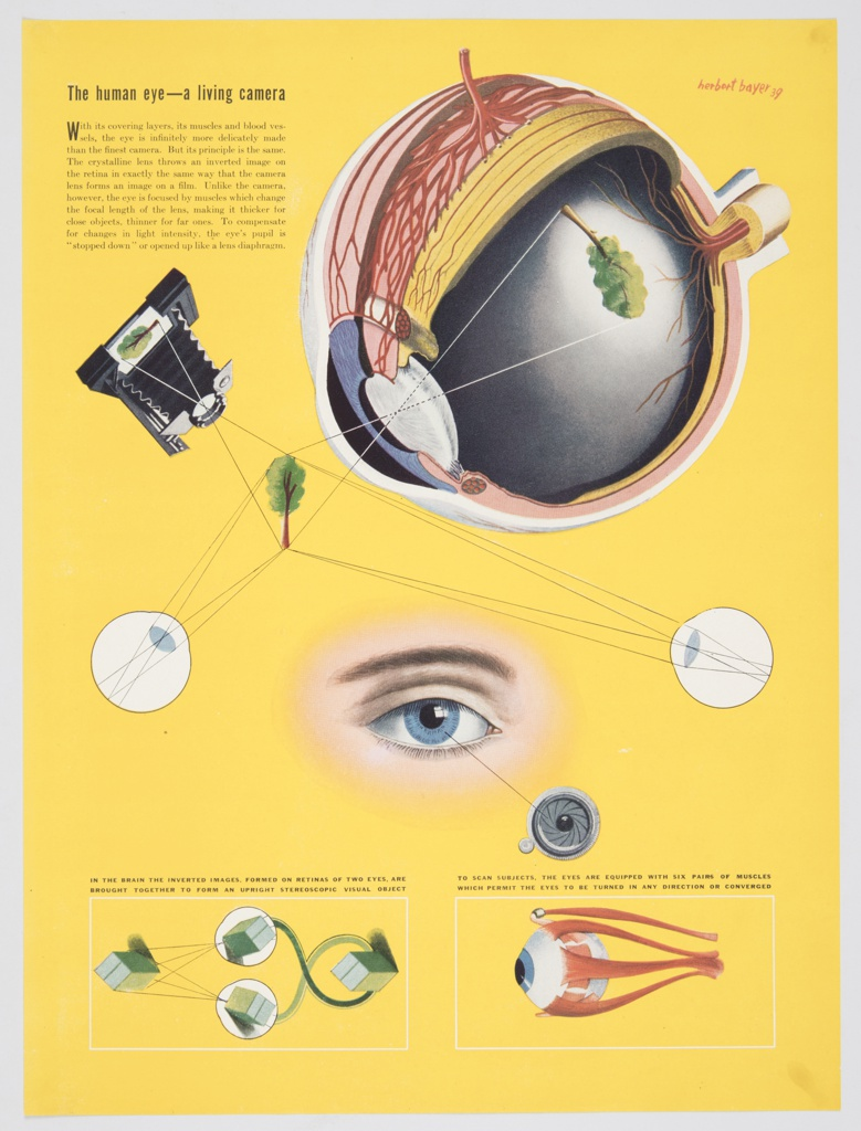 Design featuring a multicolored scientific depiction of an eyeball with a diagram demonstrating how the mechanisms of the eye imitate a camera in the upper portion of the composition. A blue eye, with a brown eyebrow, appears in the center of the composition. Two additional illustrated diagrams appear at bottom: one showing how inverted images on the retinas of eyes are brought together to form an upright object and another showing the muscles of the eye that allow the eyes to turn in any direction or converge. The design contains a solid yellow background and explanatory text alongside the illustrations. Printed in black ink, upper left: The human eye—a living camera.