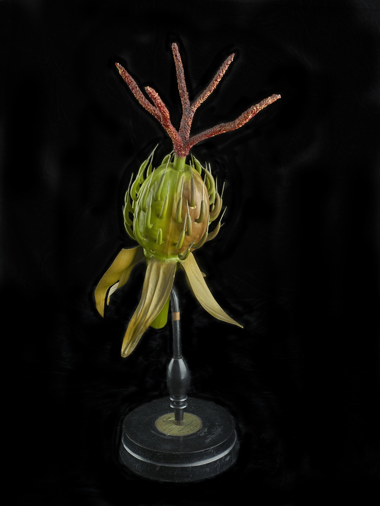 Anatomical model of Ricinus Communis glued to a vertical rod mounted on a stepped base with affixed paper label
