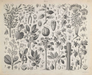 Plate 71, Iconographic encyclopaedia of science, literature, and art. / Systematically arranged by J.G. Heck. Translated from the German, with additions, and edited by Spencer F. Baird ... illustrated by five hundred steel plates, containing upwards of twelve
