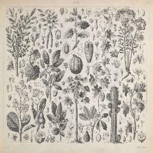 Plate showing a range of botanical illustrations