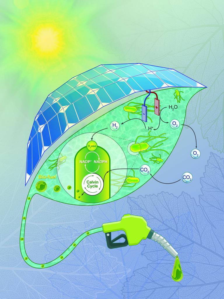 Digital Print, The Bionic Leaf