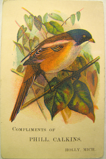 A black and orange bird seated on a branch is depicted on the recto.