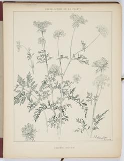 Encyclopédie Artistique Et Documentaire De La Plante, Book, 1904–1908