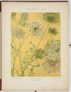 Encyclopédie Artistique Et Documentaire De La Plante, Book