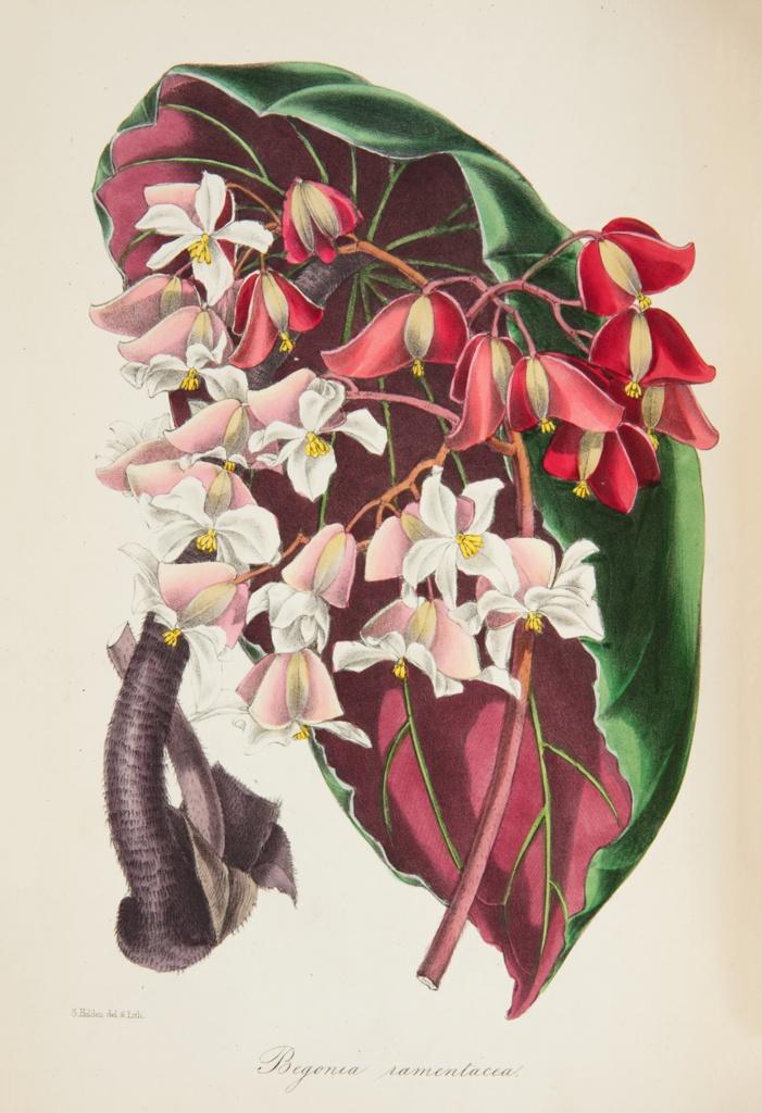 Paxton's Magazine Of Botany, Vol. 12, 1834
