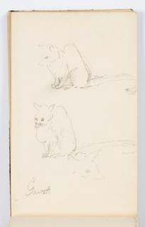 Sketchbook Folio, Sketchbook Page: Sketches of a Genet
