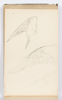 Two sketches of wings, one above the other.