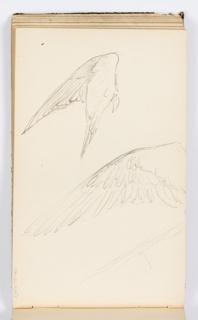 Sketchbook Folio, Sketchbook Page: Wings