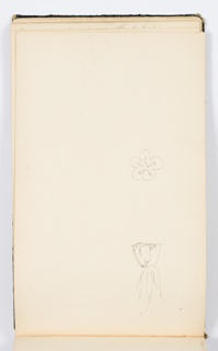 Two small sketches of flowers.