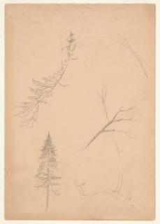 Drawing, Botanical Sketches