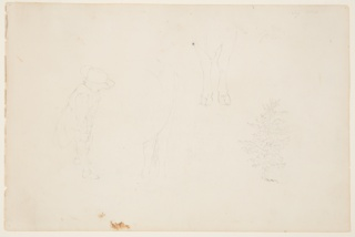 Recto:  Horizontal view of a standing child, shown from the right wearing a broad-brimmed hat and adjusting his socks, details of legs of cows and a tree.